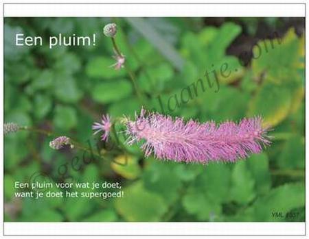 Gedichtkaart YML 1557: Een pluim!